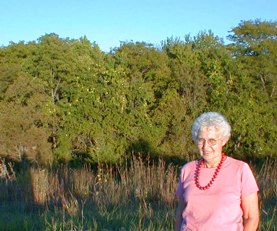 Osage Orange Hedge